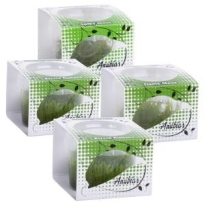 """Anubias Linea Cup Wasserpflanzen """"Moos"""" - 4 InVitro Wasserpflanzen Cups"""