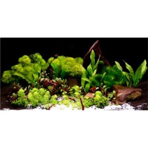 "Aquarienpflanzen Zooplants ""Asia World"" - 14 Pflanzen"