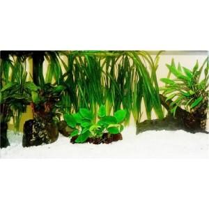 "Aquarienpflanzen Zooplants ""Diskus-Werfer"" - 13 Pflanzen"