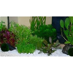"Aquarienpflanzen Zooplants ""Gesellschaftsaquarium"" - 15 Pflanzen"