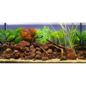 """Aquarienpflanzen Zooplants """"Goldfisch im Wasser"""" - 9 Pflanzen"""