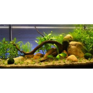 "Aquarienpflanzen Zooplants ""Hellgrüne Oase"" - 13 Pflanzen"