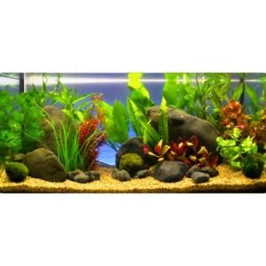 "Aquarienpflanzen Zooplants ""Rote Farbkleckse"" - 13 Pflanzen"