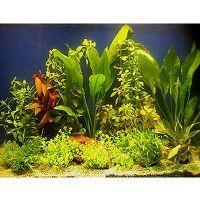 Aquarienpflanzen Zooplants für 100 - 120 cm Aquarien - 15 Topfpflanzen