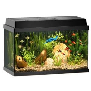 Juwel Aquarium Rekord 600 - ca. 63 l