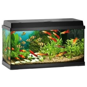 Juwel Aquarium Rekord 800 - ca. 110 l