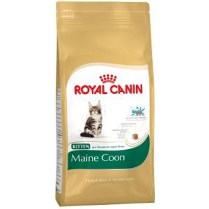 Probierpreis: 400 g Royal Canin für Kitten - Maine Coon Kitten (bis zum 15. Monat)