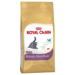 Sparpaket Royal Canin 2 x Großgebinde - British Shorthair Kitten (2 x 10 kg)