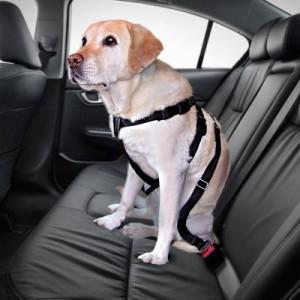 Trixie Hundegurt - Größe L: Brustumfang 70 - 90 cm