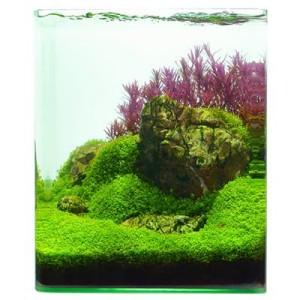 Zooplants Aquascaping-Pflanzenset von Volker Jochum - 8 Pflanzen