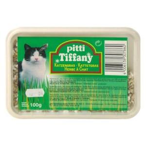 pitti Katzengras in der Schale - 100 g